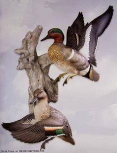 Bufflehead Taxidermy Mounts Duck Mount Ideas Taxidermy