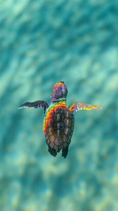 Foto - Best Picture For animal wallpaper iphone nature For Your Taste You are l Tier Wallpaper, Wallpaper Iphone Cute, Animal Wallpaper, Cute Wallpapers, Wallpaper Wallpapers, Iphone Wallpapers, Desktop, Cute Turtles, Baby Turtles