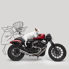 Rafael Mantesso, un publicista originario en la ciudad de São Paulo en Brasil se ve que comparte grandes momentos de diversión al lado de su bull terrier llamado Jimmy lo que lo impulso a crear una…