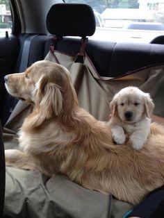 Puppy's first ride