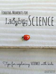 Ladybug Science Activities for Kids  from theeducatorsspinonit.com Tips for exploring science with kids  with backyard fun.