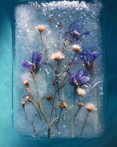 Bruce Boyd- Romantic photographs of frozen flowers in blocks of ice capture the fragility of nature Indoor Photography, Creative Photography, Art Photography, Children Photography, Art Floral, Belle Image Nature, South African Flowers, Ice Art, Fotografia Macro