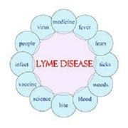 Lyme disease: the target is on you