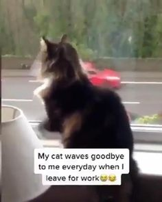 Funny Animal Jokes, Cute Funny Animals, Funny Cute, Cute Cats, Funny Cat Videos, Cute Animal Videos, Cute Animal Pictures, Video Chat, Tier Fotos