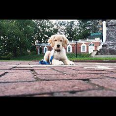 #UVa puppy!