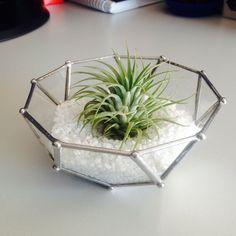 aerial plant/ terratium Terrarium, Plants, Home Decor, Terrariums, Decoration Home, Room Decor, Plant, Home Interior Design, Planets
