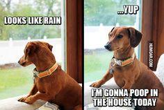 rain-poop-in-the-house-today.jpg (500×337)