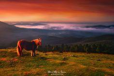 Pottoka Amanecer desde la cima de Urkiolamendi 😊 #Pottoka #Euskadi #BasqueCountry #PaisVasco