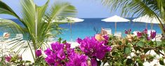Carimar is the best of all Anguilla hotels. A world-renowned Caribbean beachfront villa style resort on Mead's Bay - one of the best beaches in the world. Anguilla Resorts, Beaches In The World, Beach Club, Hotels And Resorts, Caribbean, Villas, Places, Image, Google