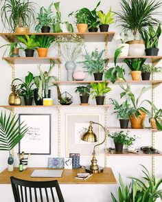 Add a plant to a shelf in every room
