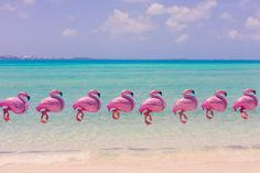 Gray Malin, Bermuda Flamingos