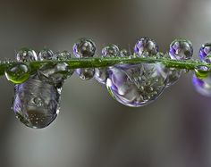 Nature Jewels