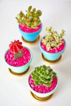 accessoires de bureau originaux, petits cactus vert et rouge dans pots verts et bleus