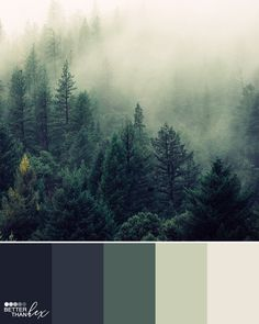 Foggy Forest – Color Palette Idea – Famous Last Words Best Bedroom Colors, Bedroom Color Schemes, Colour Schemes, Foggy Forest, Color Concept, Decoration Palette, Forest Bedroom, Forest Green Color, Green Colour Palette