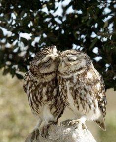 love in nature.
