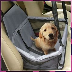 Puppy Accessories - Things You Need Before Bringing A Puppy Home - Doggie Woof Australian Shepherd Husky, Pet Dogs, Dogs And Puppies, Doggies, Cavalier King Charles Spaniel, Dog Branding, Pet Travel, Dog Mom, Dog Life