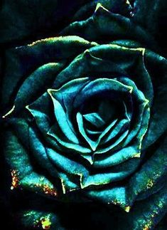 More dreams please! Teal And Gold, Dark Teal, Teal Blue, Aqua, Dark Green Aesthetic, Gold Aesthetic, Types Of Roses, Beautiful Rose Flowers, Shades Of Teal