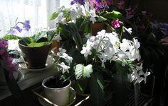 Soilikeita Sammatin ruokaravintolassa Kuvaaja: Viherpeukalo Plants, Plant, Planets