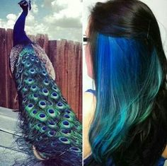 Awesome peacock colored hair