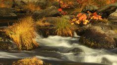 Autumn Gold 008: A mountain stream flows through autumn foliage (Loop).   A Luna Blue  http://www.alunablue.com  Imagery for Your Imagination