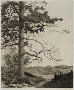 "George Elbert Burr (1859-1939) - Old Pine, Estes Park. Etching on Paper. Circa 1922. 11-7/8"" x 9-7/8""."