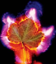 Kirlian electro-photography of leaf | Kirlian Photography ...