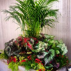 An interesting mix of tropical and annual plants.