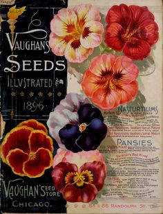 Vaughans Seed Store Catalogue  :   1896 - illustrated