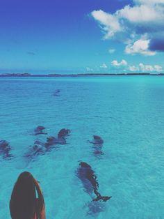 I feel like I belong to the sea, and I wish I could swim free with the dolphins and the whales.                                              www.taramtominaga.com Tara Tominaga   Art   Photography   Ocean