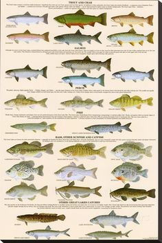 Images freshwater fish freshwater game fish hf67 30 by for Freshwater fishing games