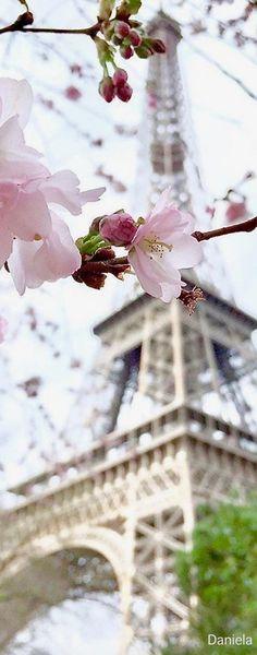la vie en rose <3 Paris Torre Eiffel, Paris Eiffel Tower, Tour Eiffel, Paris Pictures, Nature Pictures, Travel Pictures, Paris In Spring, My Little Paris, Paris Wallpaper