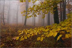 Rzędkowice- Jura jesienny bukowy las