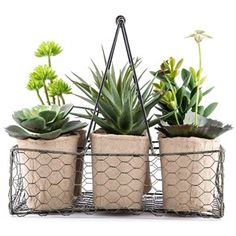 Add a hint of the great outdoors to your indoor decor with this unique Green Succulents in 6-Compartment Wire Basket - hobby lobby