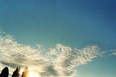 Alberi e cielo al tramonto  [foto di Alba Rigo]