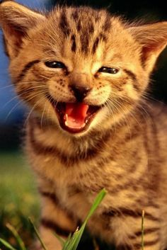 I´m happy!!
