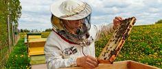 Cum se dezvoltă apicultura o încregăntură a agriculturii Tuturor ne place un ceai călduț cu miere, mai ales atunci când suntem bolnavi. Alții preferă un pahar de lapte cald cu miere, care ne scapă deseori de insomnie și de stările de tristețe și plictiseală. Mierea de albine conține numeroși antioxidanți – caracteristica importantă pentru...  https://promo-2biz.ro/cum-se-dezvolta-apicultura-incregantura-agriculturii/