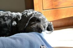 My dog...soaking up the sun :)