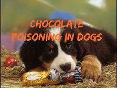 1000 Images About Pet Info Videos On Pinterest Jackson