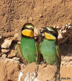 Beautiful Birds, Beautiful Pictures, Nature Story, Gifs, Bee Eater, Bird Gif, Animal Species, Colorful Birds, Animated Gif