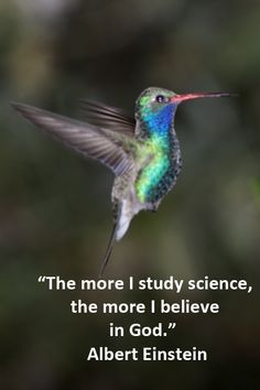 """The more I study science, the more I believe in God."" —Image of HOVERING HUMMINGBIRD IN ARIZONA -- Arizona has been called the hummingbird capital of the United States."