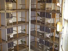 large parrot breeding cages