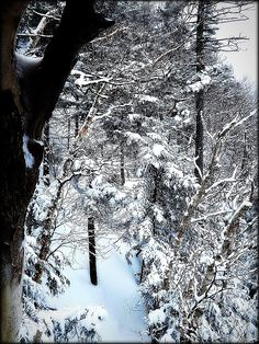 Winter's Glory - photograph by James Aiken. Fine art prints for sale. #snowfall #escapetheheat #smugglersnotch