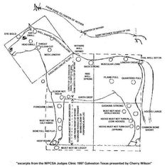 Pony Breeds, Welsh Pony, Horse Care, Champion, Animal Anatomy, Horses, Horse Grooming, Horse, Horse Nursery
