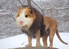 I usually don't stray into fantasy, but check out Arne Olav's hybrid animals --- like this Guinea Lion