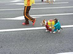 Carnevale da... Cani: 21 animali travestiti (e perplessi) - Corriere.it