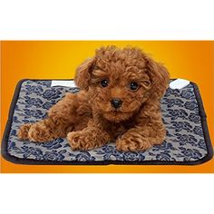 Pet Heating Pad,Cat Heating Pad Waterproof Adjustable Temperature Electrical Heating Pads For Dog/Cat With Chew Resistant Cord(17.7x17.7 Inch) -- Want to know more, click on the image. (This is an affiliate link) #Dogs