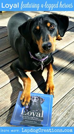 Learn more about Loyal and the hero dogs spotlighted in this amazing book ©LapdogCreations #sponsored Dog Mom | Dog Products | Life with Dogs
