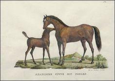 Karl Brodtmann  Arabische Stute mit Fohlen (Arabian mare with foal)  c. 1824