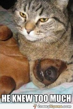 He knew too much. Cat has the dog in it's paws. Humorous animal photo.