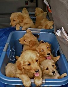 Baskets of puppies!!! I'll take them all!!!! #cute #dogs